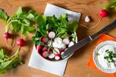 Rädisa med ny örter och gräddfil Vitaminsallad med parsl Royaltyfria Foton