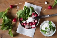Rädisa med ny örter och gräddfil Vitaminsallad med parsl Royaltyfri Bild