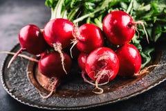 Rädisa ny rädisa ny rädisared ny japansk salladgrönsak för mat Sund ny grönsak Royaltyfri Foto