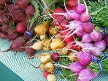Rädisor och beta på bonde marknad Arkivbilder