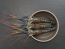 Räka eller räka i bruntrundabunke med mörk bakgrund Fotografering för Bildbyråer
