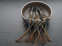 Räka eller räka i bruntrundabunke med mörk bakgrund Royaltyfri Bild
