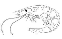 Räka i form av en kontur av tunna linjer Målarfärg japansk kokkonst Isolerad illustration på vitbakgrund royaltyfri illustrationer