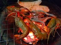 Räka och tioarmade bläckfisken har brännskadan royaltyfria bilder