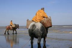 Räkafiskare på hästryggen, Oostduinkerke, Belgien Arkivfoto