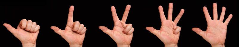 räkna fingrar Hand för man` s med fingrarna av ett till fem på en svart bakgrund Fotografering för Bildbyråer
