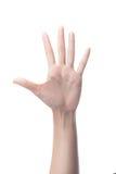 Räkna kvinnahänder som visar fem fingrar, nummer 5 Royaltyfria Foton