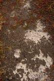 räkna sprucken jordningstillväxt Arkivfoto