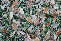 räknad frost Arkivfoton