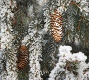 räknad granfrosttree arkivfoto