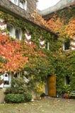 räknad husmurgrönasten Royaltyfria Bilder