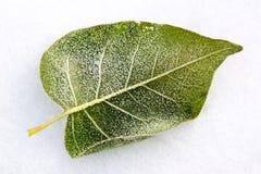 räknad leafskattvinter royaltyfri bild