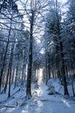 räknad ny morgonsnow för skog Arkivfoton