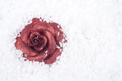räknad rose snow för prydnad Royaltyfri Bild