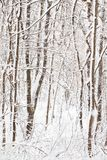 räknad skogsnow Arkivbilder
