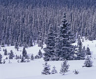 räknad skogsnow Royaltyfri Fotografi