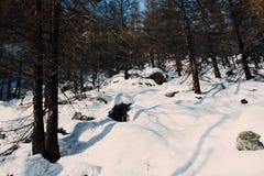 räknad skogsnow Royaltyfria Bilder