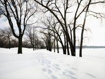 räknad snowtrail Arkivfoton