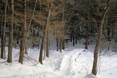 räknad snowtrail Arkivbilder