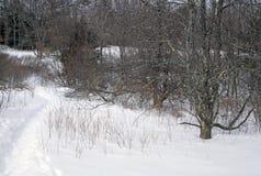 räknad snowtrail Royaltyfria Bilder