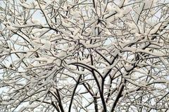 räknad snowtree Royaltyfri Foto