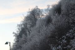 räknad snowtree Arkivfoton