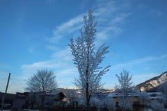 räknad snowtree Fotografering för Bildbyråer