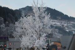 räknad snowtree Royaltyfria Bilder