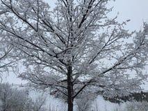 räknad snowtree Arkivbild