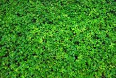 räknad vegetation arkivbild