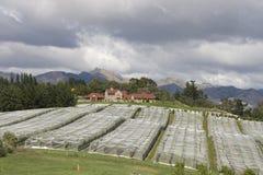 räknad vingård Fotografering för Bildbyråer