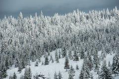 räknad vinter för bergsnowtrees Arkivbild