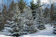 räknad vinter för skogsnowtrees arkivfoton