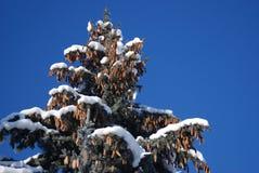räknad vinter för trees för dagsnow solig Arkivfoto