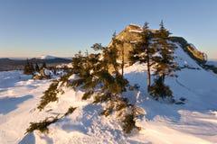 räknad vinter för trees för ligganderussia snow snöig Arkivbilder