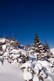 räknade bergsnowtrees Royaltyfri Foto