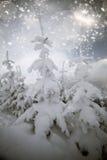 räknade bergsnowtrees Royaltyfri Bild