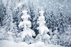 räknade bergsnowtrees Royaltyfria Bilder