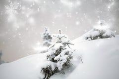 räknade bergsnowtrees Arkivfoto