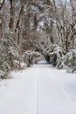 räknade fryste trees för gata för snow för lampnigthväg övervintrar Royaltyfria Bilder