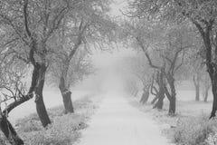 räknade fryste trees för gata för snow för lampnigthväg övervintrar Royaltyfri Fotografi