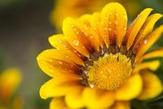 räknade liten droppe blommar yellow Royaltyfri Foto