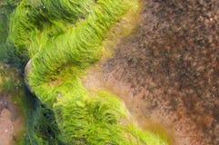 räknade mossrocks Fotografering för Bildbyråer
