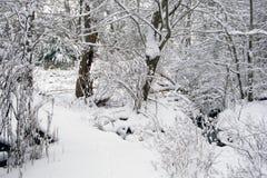 räknade snowträn Arkivfoto