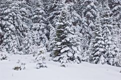 räknade snowtrees Royaltyfri Foto