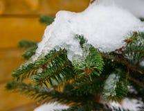 räknade snowtrees Arkivbilder