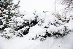räknade snowtrees Arkivfoton