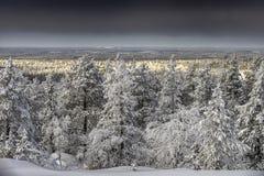 räknade snowtrees Arkivfoto