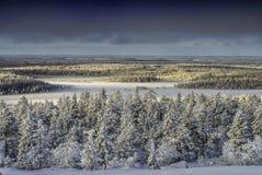 räknade snowtrees Royaltyfria Bilder