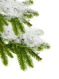 räknade snowtrees isolerad white för filial gran Fotografering för Bildbyråer